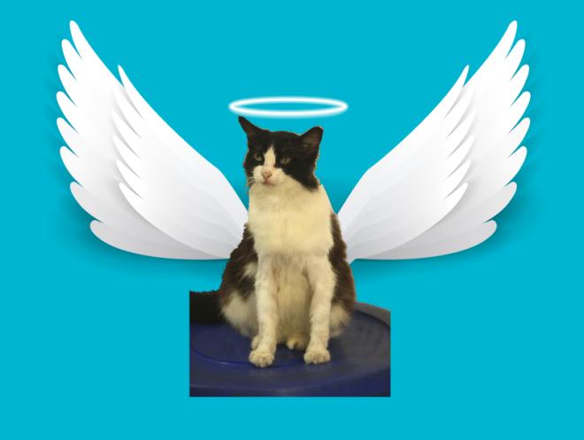 Mimi Angel-01